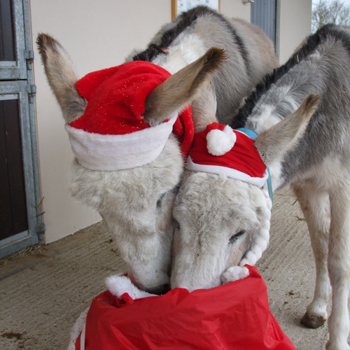 holiday donkey.jpg